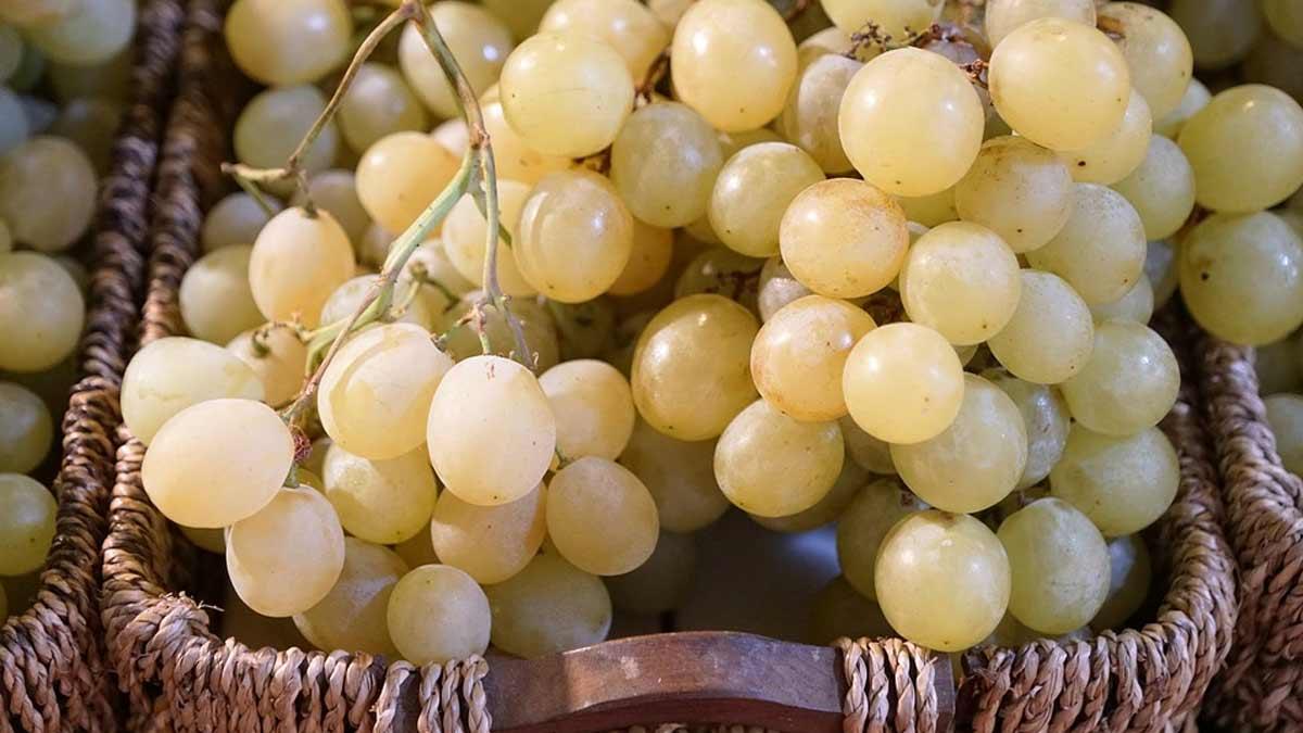 Le bio, opportunité pour le secteur viticole français ?